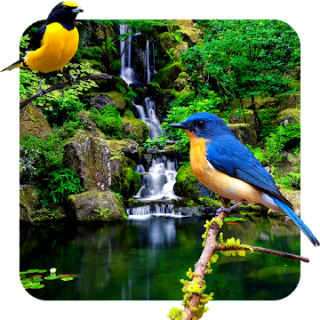 3D birds parallax PRO live wallpaper