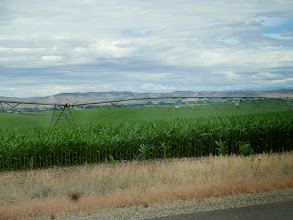 Photo: Day 8 Baker OR to Fruitland ID 84 miles 2180 ' climbing  :Cornfields 20 miles before Ontario