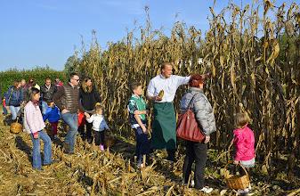 Photo: Dal mais alla Polenta - la raccolta delle panocchie