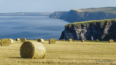 Photo: Troup Head, Aberdeenshire
