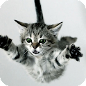 Cat Jumping Live Wallpaper icon