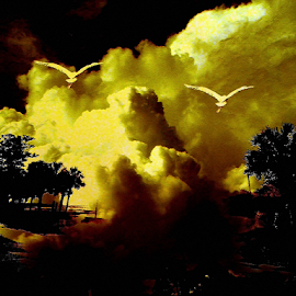 Yellow Clouds by Edward Gold - Digital Art Things ( digital photography, yellow clouds, scenic, birds, tan clouds, digital art, palm trees,  )