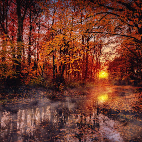 Fairy land 2 by Anita Meis - Landscapes Forests ( fall, mysterious, sunset, dark, fall colours, sun, mist, fog )
