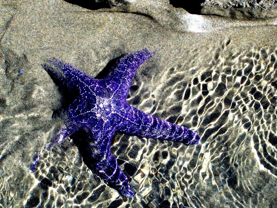 Purple by Danica Burden - Nature Up Close Sand