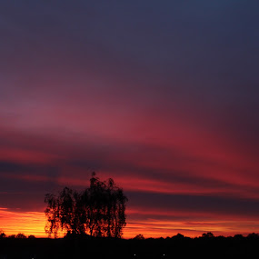 Sunset tree  by Louise Corr - Landscapes Sunsets & Sunrises ( sunset sun tree silhouette )