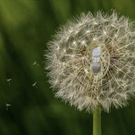 Seeds Of Time by Barry Smith - Digital Art Things ( digital photography, seeds, time, creative, dandelion )