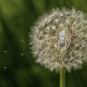 Seeds Of time.jpg