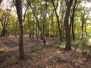 Photo: 中央公園の雑木林。この真ん中を36mの四車線道路通るという計画。