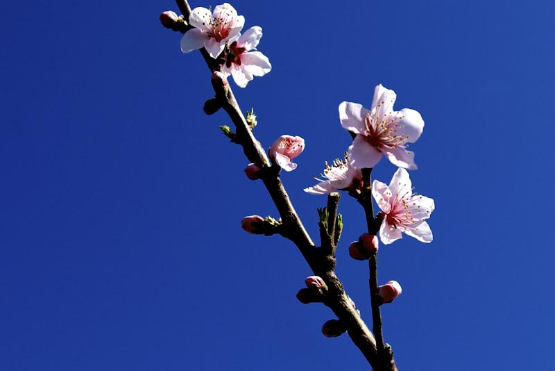 fiori nel blu di Ltz/rivadestra