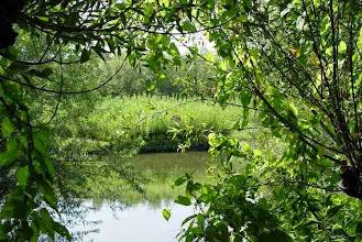 Photo: Nederland De Biesbosch  Bron: www.picturesofholland.nl  .