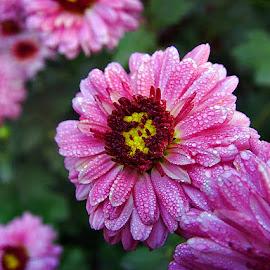 by Preety Patel - Flowers Single Flower