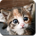 Cat and Kitten Sounds icon