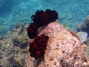 Photo: Crinoid sp. (Feather Star), Entatula Island Beach Club reef, Palawan, Philippines.