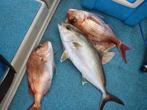 Photo: げげっ! トリプルキャッチ! 真鯛、ネリゴ、真鯛! さぞ重たかったでしょう!
