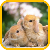 Rabbits Live Wallpaper