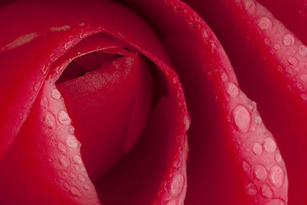 Bocca di rosa. di Paolo Zanoni