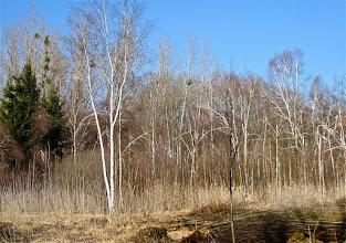 Photo: Le premier marais