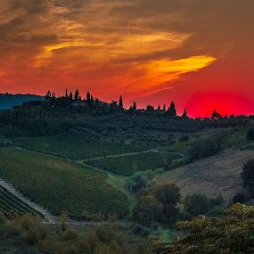Tuscan vineyards and sunset by Sara Verdini - Landscapes Sunsets & Sunrises