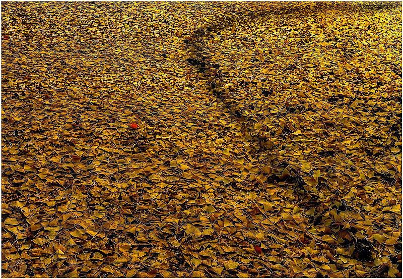 ...giallo autunnale di max bertolini