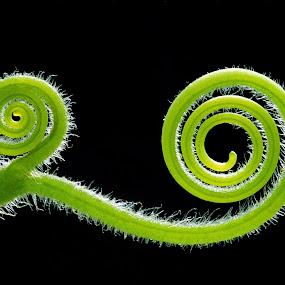 Chameleon by Damjan Voglar - Nature Up Close Flowers - 2011-2013