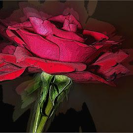 Red rose by Marissa Enslin - Digital Art Things (  )