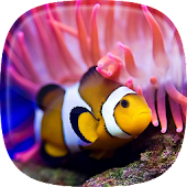 Ocean Fish Live Wallpaper 🐠 Animated Aquarium