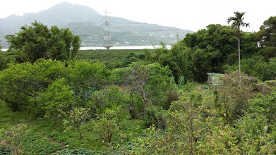 Photo: Mangrove Ecocenter