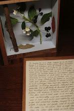 Photo: Mark Dion, bibliotek bl.a. med bøger af træ inspireret af Carl Schildbach