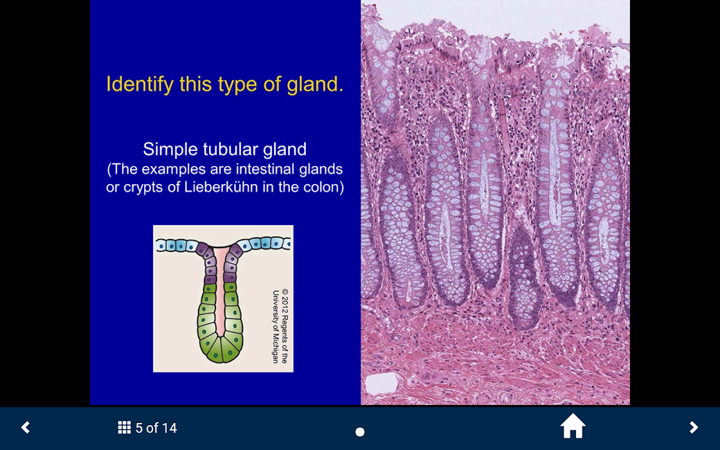 Histology Complete- SecondLook- screenshot