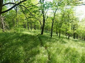 Photo: Tuscarora Trail