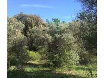 terrain à Saint-Julien (83)