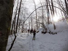 Photo: C'è una strada nel bosco...