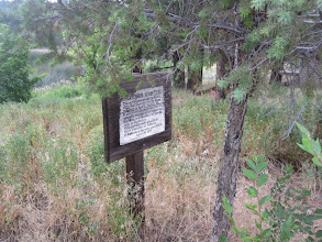 Photo: Old sign and Douglas Fir, behind the school and beside the lake...