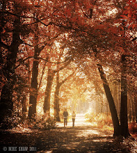 Photo: Autumn Walk  Good morning Googlers :)  Is there any better time to walk in the forest than at autumn? Its been a long time coming but the seasons have finally started to change in the UK, for a while I thought we would not get much but virtually overnight the leaves have turned and we have blankets of golden colour lining the floor and deep reds in the tree's. Its becoming a photographers paradise but I still get told its going be short lived here.