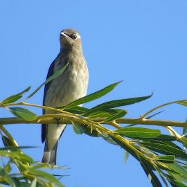 TREE TOP BIRD by Cynthia Dodd - Novices Only Wildlife ( bird, nature, outdoor, wildlife, feathers, animal )
