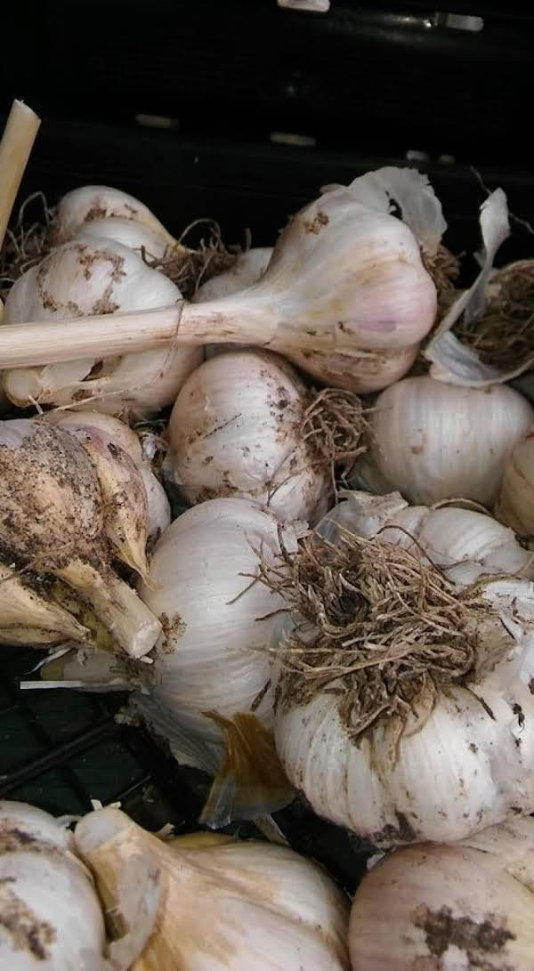 Garlic Fresh From The Garden!