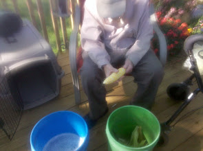 Photo: Harold chucking corn on deck