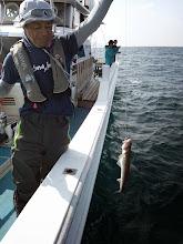 Photo: ・・・ESO。 最近、ESOばかり釣るから、みんなから「かまぼこ先生」って呼ばれてるそうな。