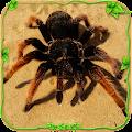 Spider Simulator: Life of Spider
