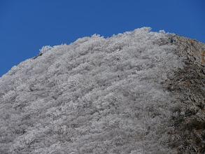藤原岳霧氷アップ