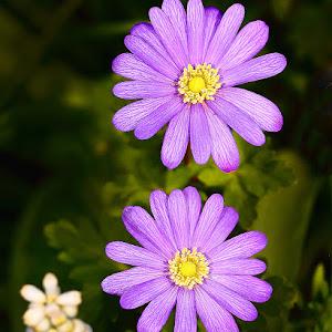 Duo violet.jpg