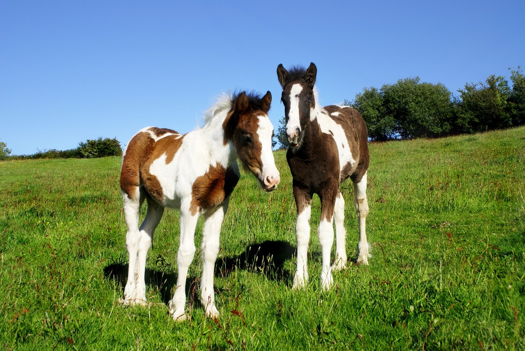Y Horse Is Amazing Cute horse wallpapers ...