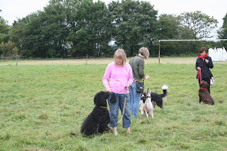 Photo: Lisa with Ralph Labradoodle, Claire with Henry Whippet, Jo with Fate Labrador