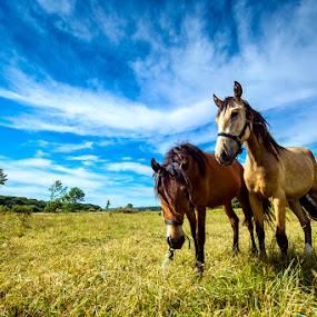 fellows by Paulo Mendonça - Animals Horses