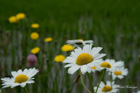 野に咲く花。。。