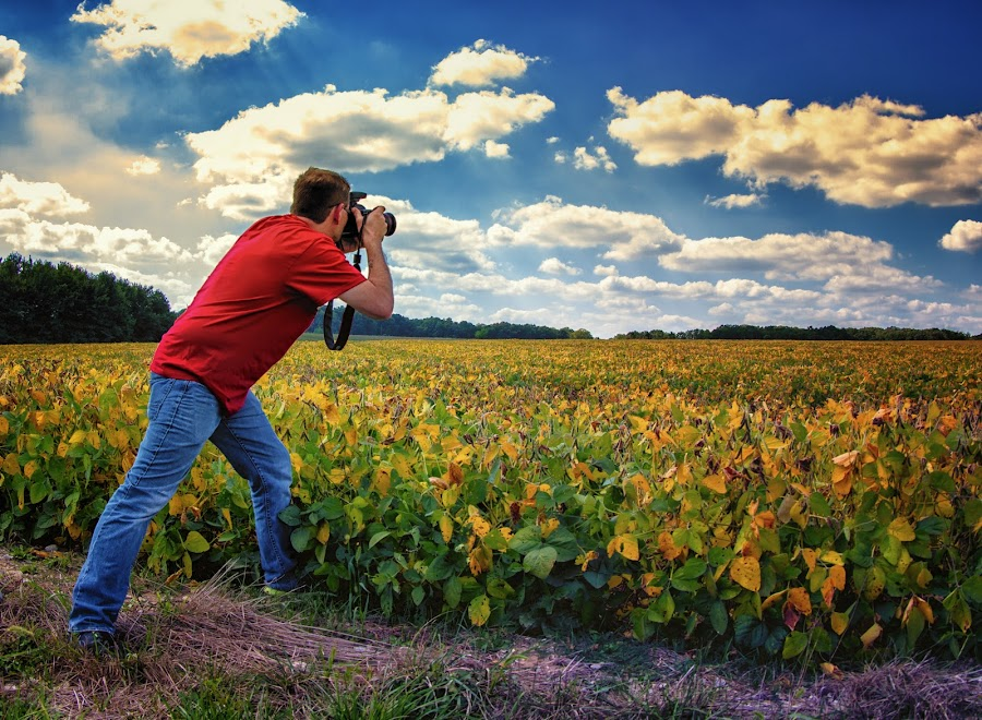 Photographing the Photograph by Linda Tiepelman - People Street & Candids ( clouds, canon camera, missouri, sky, blue, new melle, plants, photographer, yellow, flowers, man, fields )
