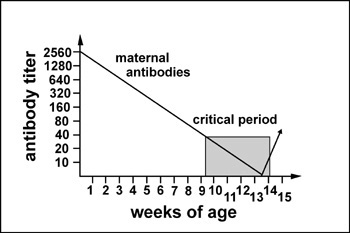 """Figure 5. """"Critical period"""" for vaccination against CPV due to the persistence of maternal antibodies. Titers below 1:40 are variably protective, but may interfere with vaccination."""
