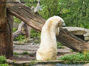 Photo: Wieder an Land - Knut inspiziert den Baumstamm ;-)