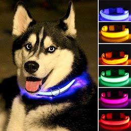 Zgarda led cu lumini multicolore pentru caini sau pisici