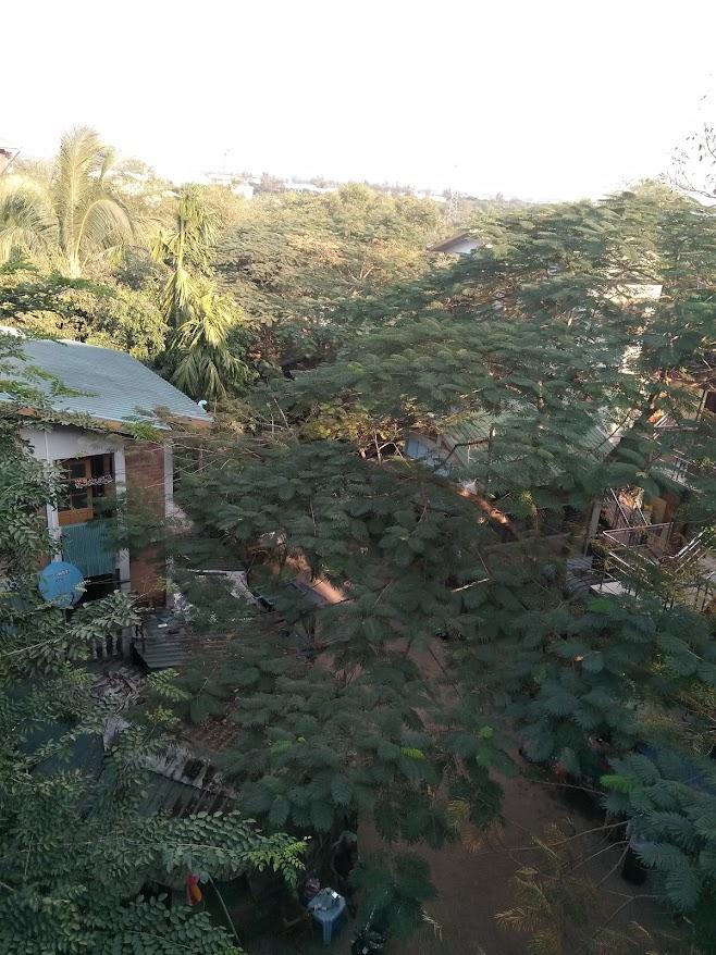 屋上から見ると森みたいな村